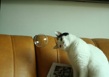 Cat-What-is-this-thing-you-call-bubbles